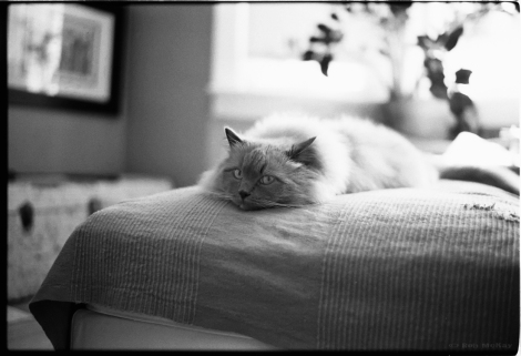 Backlit Lounging Cat