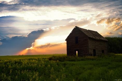 Prairie Sunsets Over Canola - Alberta