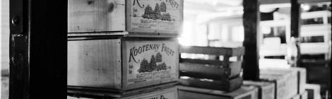 kootenay BC grapes