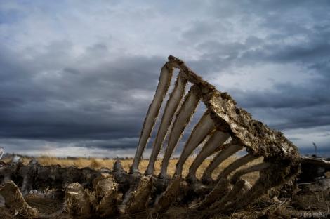 Prairie Bones