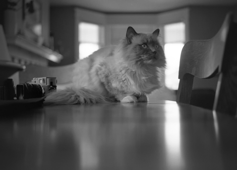 Leica M9 Film Cat