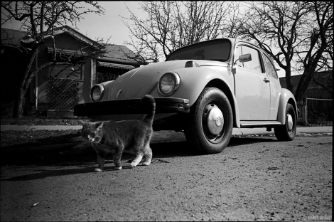 Volkswagen Beetle Cat