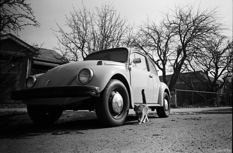 Volkswagen Beetle + Cat photographed with the Leica MP film camera in Calgary