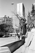 Parkour Calgary