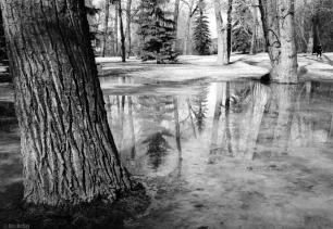 Fuji Klasse S + Trees + Ice