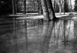 Fuji Klasse S + Tree Reflections