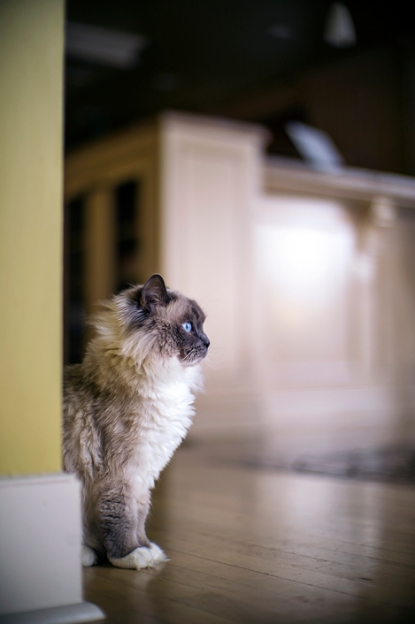 Leica Noctilux + Sony A7R Camera + Photo of a cat