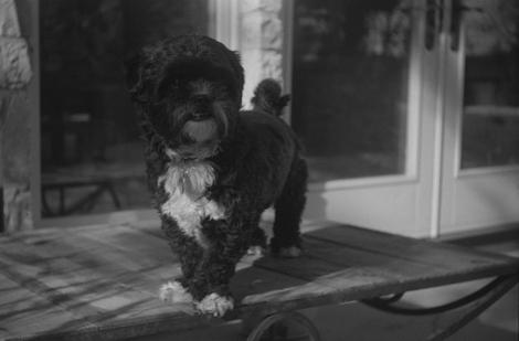 Argus C Test Shot with expired Kodak Tmax film